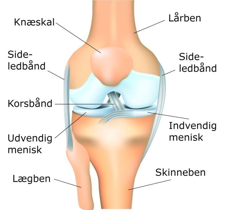 overrevet ledbånd knæ